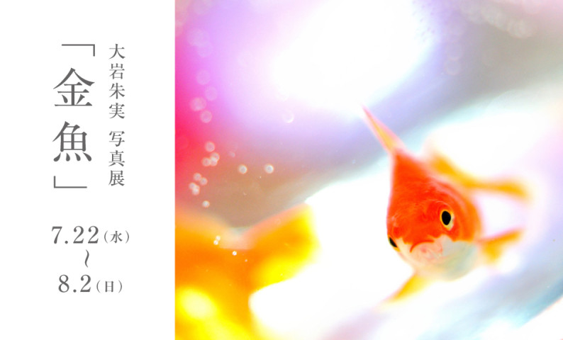oiwa_kingyo_banner
